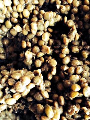Lentilles. Photo: Guillemette de Fos