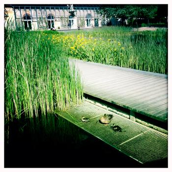 Le parc Martin Luther King. La faune près du bassin. Photo: LSDP