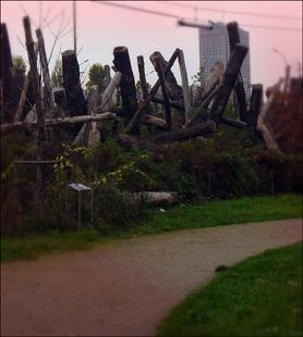 Les bois morts de la forêt linéaire. Photo: PHB/LSDP