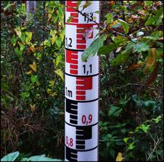 aperçu de la forêt linéaire. Photo: PHB/LSDP