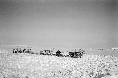 Eleveur de Rennes rentrant à son campement. Une famille du village de Novorybnoïe, sur les Photo: Nicolas Mingasson/Observatoire photographique des Pôles.