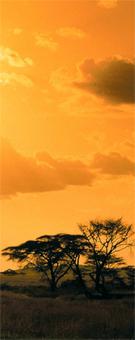 Détail de la couverture du livre. Source image: Gallimard