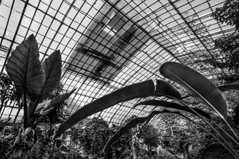 Le Jardin des Serres d'Auteuil. Photo: Jean-Christophe Ballot