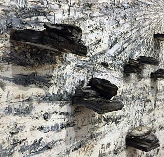 """Für Paul Celan: Aschenblume"", 2006 (détail). Photo: Valérie Maillard"