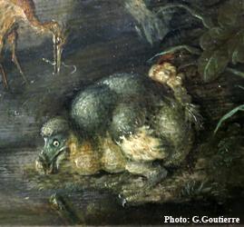 Dodo Savery, détail. Photo: Gérard Goutierre