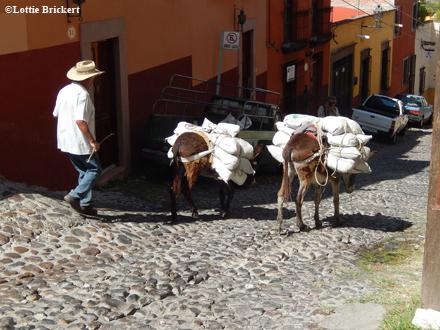 Muletier dans les ruelles pavées de San Miguel de Allende. Photo: LB