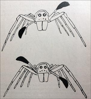 le palpe des araignées